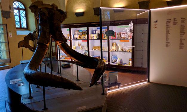 Visita al Museo Paleontologico di Montevarchi