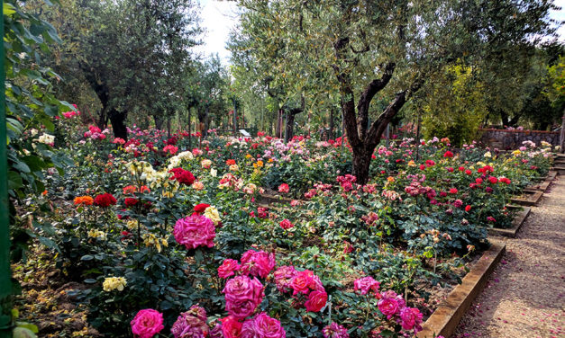 Il Roseto Botanico Gianfranco e Carla Fineschi